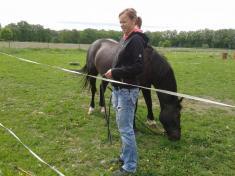 Dozvěděli jsme seřadu zajímavých informací oživotě, chovu idrezůře koní.