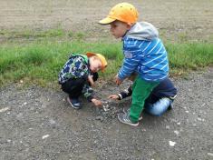 stavíme hmyzí domky